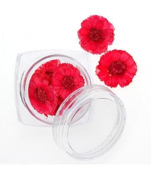 Сухоцветы для ногтей №98