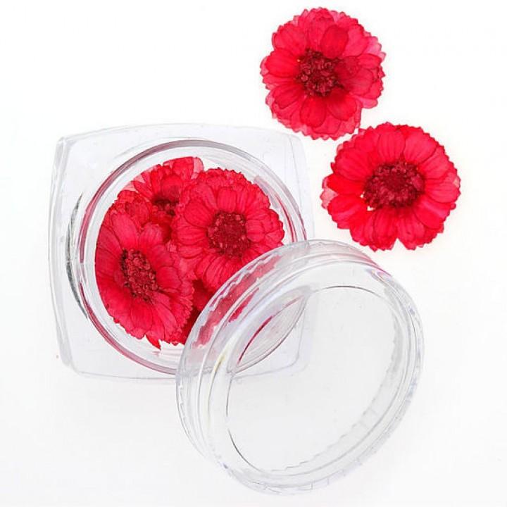 Сухоцветы для украшения и дизайна ногтей №98