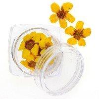 Сухоцветы для ногтей №101