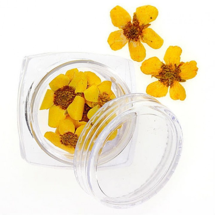 Сухоцветы для украшения и дизайна ногтей №101