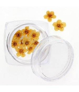 Сухоцветы для ногтей №105
