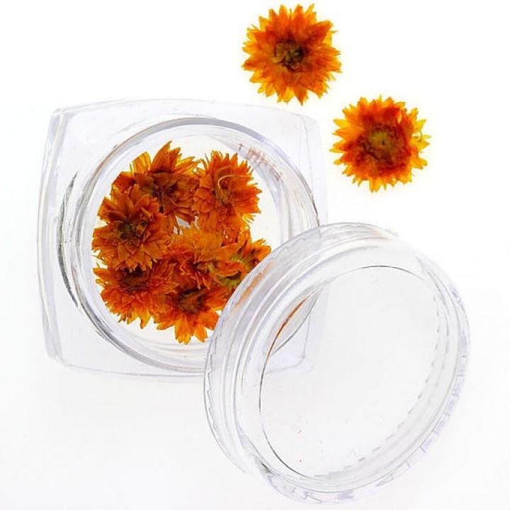 Сухоцветы для украшения и дизайна ногтей №79